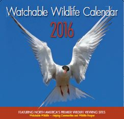 2016 Watchable Wildlife Calendar